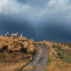 R christopher Vest - Side Road In Idaho With Pronghorn