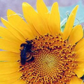 Diane Backs-Mancuso - Silent Sunflower Bee