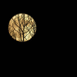 Srinivasan Venkatarajan - Silhouette of leafless barren tree branches on creeping across on Supermoon