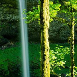 Nick  Boren - Silver Creek Falls Landscape