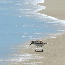 Sandi OReilly - Simplicity of A Beach