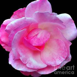 Jasna Dragun - Simply And Pink