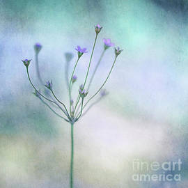 Simply flowers - Priska Wettstein
