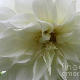 Dora Sofia Caputo Photographic Art and Design - Simply White - Dahlia