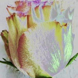 Barbie Corbett-Newmin - SIncere condolences rose card