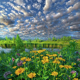 Sing For The Day - Phil Koch