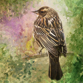 Jordan Blackstone - Sing Your Song - Bird Art