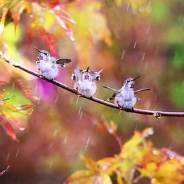 Lynn Bauer - Singing in the Rain