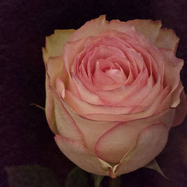 Richard Cummings - Single 2017 Vintage Rose