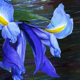 Phyllis Denton - Single Blue Iris Painterly