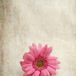 Randi Grace Nilsberg - Single Pink