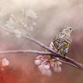 Jai Johnson - Siskin In The Garden