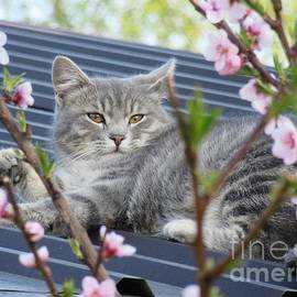 Vesna Martinjak - Sivko enjoying the spring