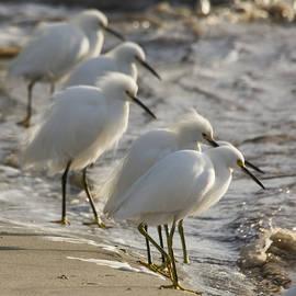 Bruce Frye - Six Egrets