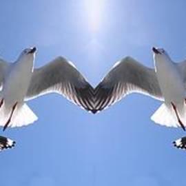 Geoff Childs - Six Heavenly Backlit Seagulls Flying Overhead in Blue Sky.