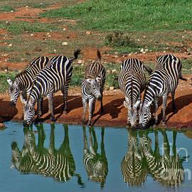 Beth Wolff - Six Zebras