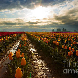 Reflective Moment Photography And Digital Art Images - Skagit Valley Morning