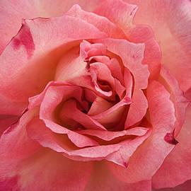 Sunil Kapadia - SKC 4942 The Pink Harmony
