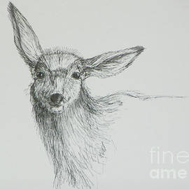 Dawn Senior-Trask - Sketch of a Mule Deer Doe