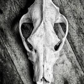David Hare - Skull on Wood