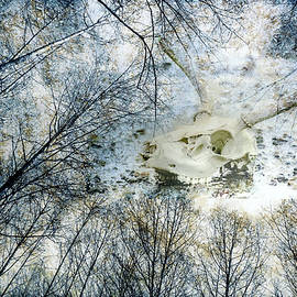 Ronda Broatch - Skully Dreams of Beach and Trees