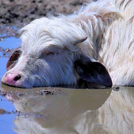 Theresa Campbell - Sleeping Baby White Water Buffalo