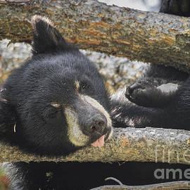 Mitch Shindelbower - Sleeping Bear Cub