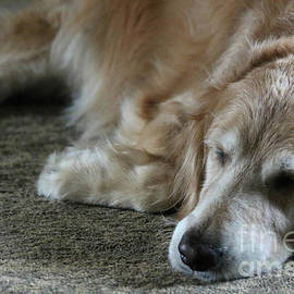Veronica Batterson - Sleeping Golden