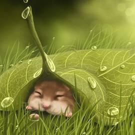 Veronica Minozzi - Sleeping in the rain