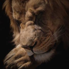 Ernie Echols - Sleeping Lion Digital Art