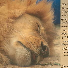 Debbie Nobile - Sleeping Lion with Verses from Jeremiah