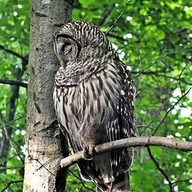 Christy Ricafrente - Sleeping Owl