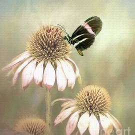 Janette Boyd - Small Postman Butterfly on Cone Flower