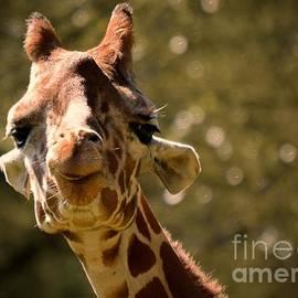 Sarah Labadie - Smiling Giraffe