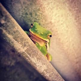 Sarah Labadie - Smug Frog