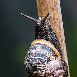 Martina Fagan - Snail