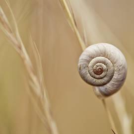 Snail on Autum Grass Blade - Nailia Schwarz