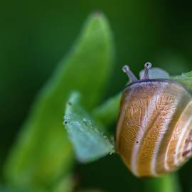 Ignacio Leal Orozco - Snail on green
