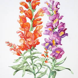 April McCarthy-Braca - Snapdragons