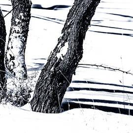 Karen Slagle - Snow and Shadows