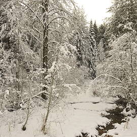 John Chellman - Snow covered stream