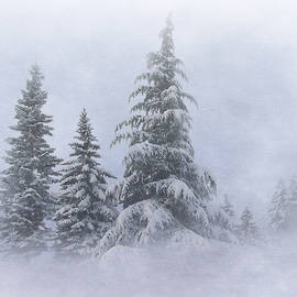 Angie Vogel - Snow Covered Trees