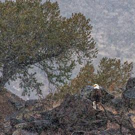 Britt Runyon - Snow Flurry Bald Eagle