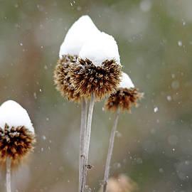 Debbie Oppermann - Snow Hats