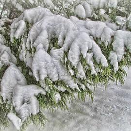 Victor Montgomery - Snow On The Pine