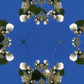 Nancy Pauling - Snowball Tree Fractal