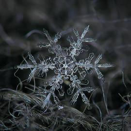 Alexey Kljatov - Snowflake 2 of 19 March 2013