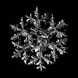 Alexey Kljatov - Snowflake vector - Gardener