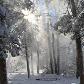 Dani McEvoy - Snowflakes and Sunbeams