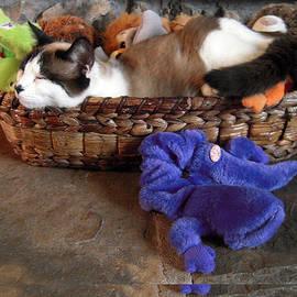 Michele Avanti - Snowshoe Siamese Cat n Toys